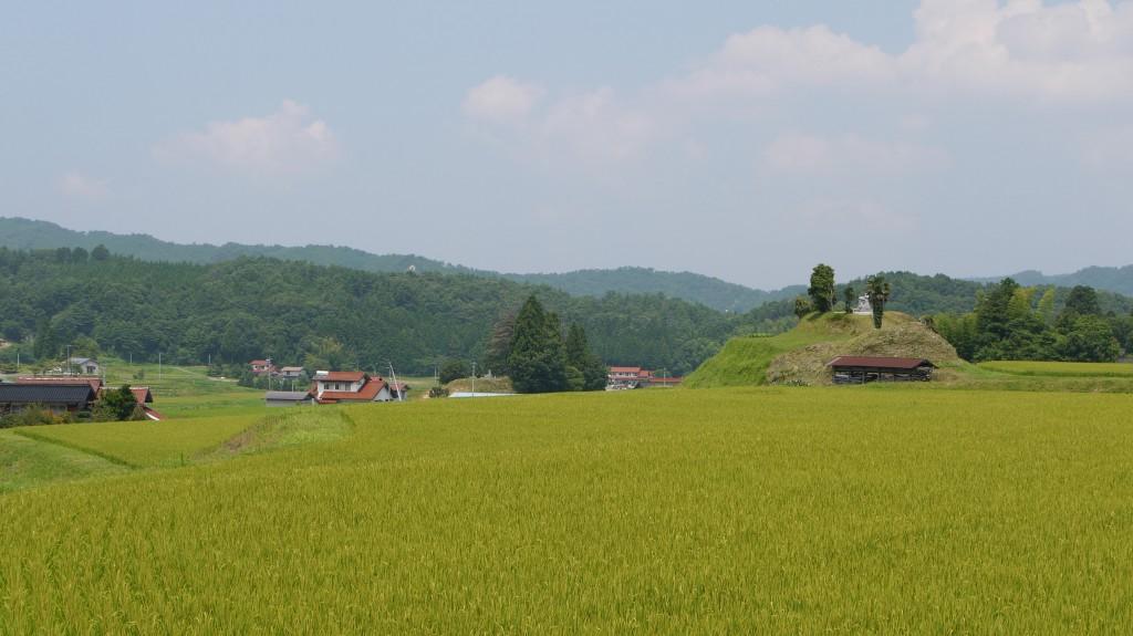 仁多米田んぼ風景